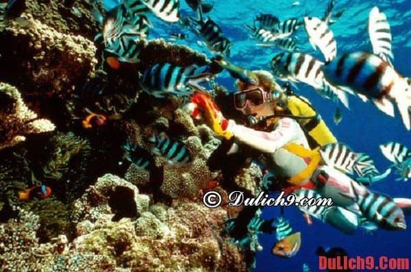 Hòn Mun: Điểm thăm quan du lịch biển bậc nhất Nha Trang