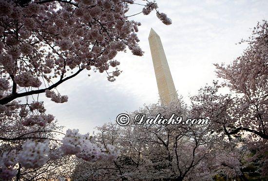 Kinh nghiệm du lịch Washington DC tự túc, chi tiết từ A-Z: Hướng dẫn đi lại, tham quan, vui chơi khi du lịch Washington DC