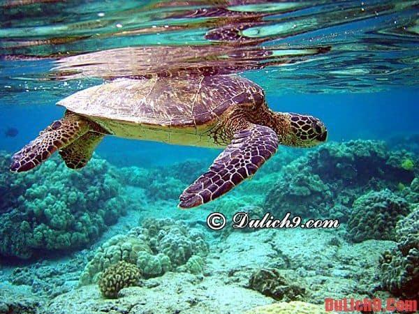 Kinh nghiệm du lịch Côn Đảo bổ ích