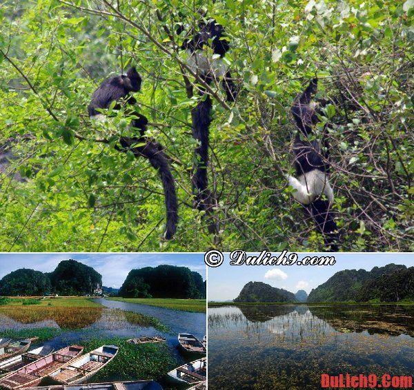Du lịch Ninh Bình khám phá khu bảo tồn thiên nhiên Vân Long: Địa điểm tham quan, du lịch hấp dẫn, cực đẹp ở Ninh Bình