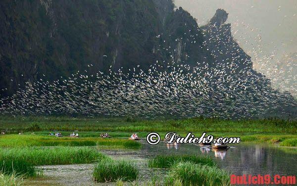 Du lịch Ninh Bình chiêm ngưỡng vườn chim Thung Nham: Nên đi đâu chơi, tham quan khi du lịch Ninh Bình?
