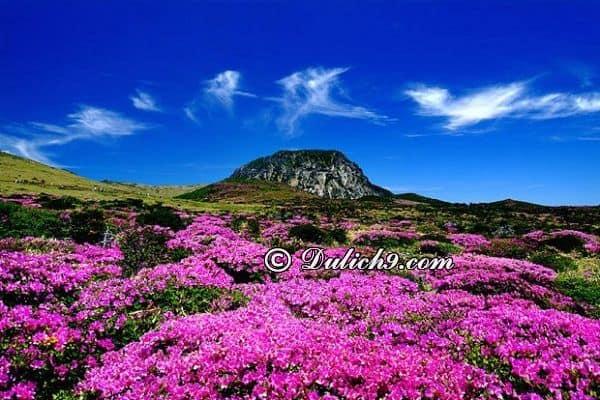 Nên du lịch đảo Jeju vào thời gian nào?