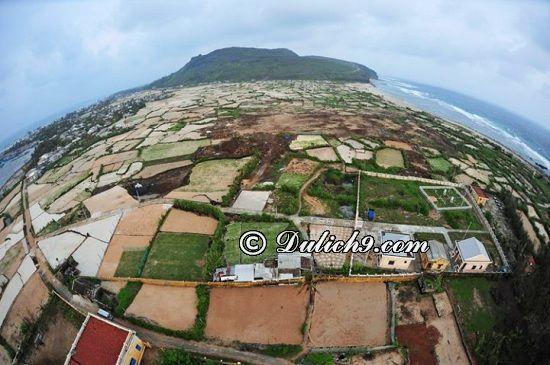 Kinh nghiệm du lịch đảo Lý Sơn tự túc: Hướng dẫn lịch trình tham quan, vui chơi, ăn uống khi du lịch đảo Lý Sơn