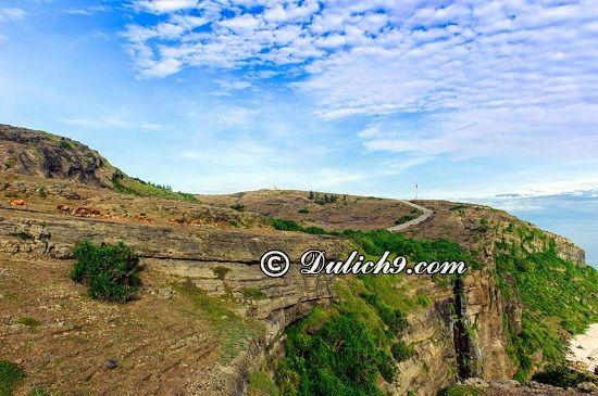 Giới thiệu khái quát về đảo Lý Sơn: Hướng dẫn tour du lịch Lý Sơn giá rẻ