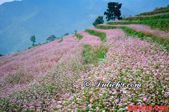 Kinh nghiệm du lịch Cao Bằng ngắm hoa Tam Giác Mạch