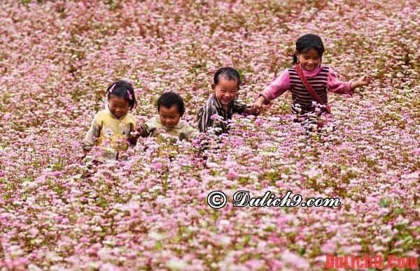 Địa điểm ngắm hoa tam giác mạch đẹp ở Hà Giang