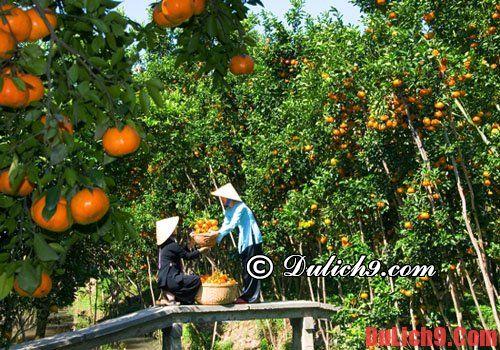 Hướng dẫn du lịch Cần Thơ - Các khu miệt vườn, cây ăn quả
