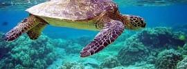Thời điểm thích hợp nhất để du lịch Côn Đảo