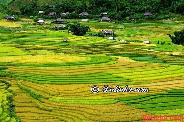 Nên du lịch, phượt Pù Luông, Thanh Hòa ngắm lúa chín thuận lợi và tuyệt vời nhất?