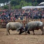 Những lễ hội văn hóa truyền thống không thể không tham dự khi du lịch Sơn La