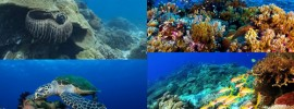Những địa điểm lặn biển Philippines nổi tiếng thế giới