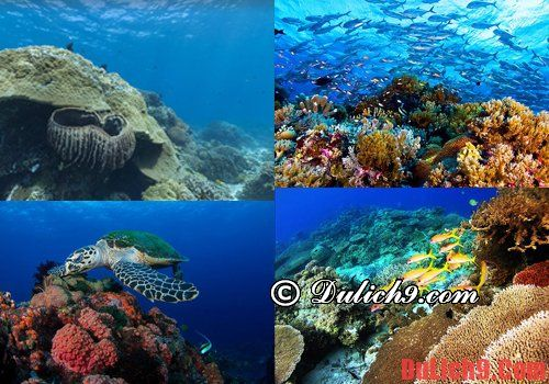 Những địa điểm lặn biển Philippines hấp dân