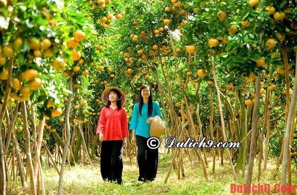 Hướng dẫn du lịch miệt vườn Vĩnh Long
