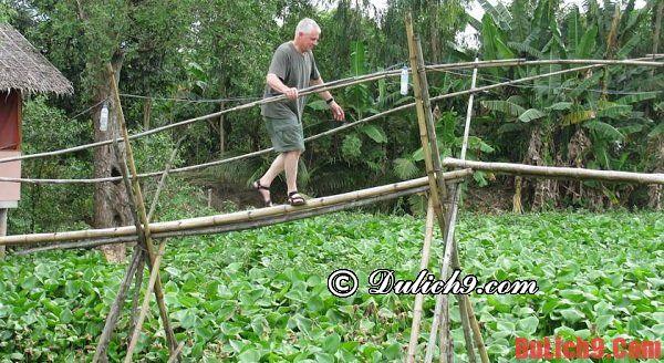 Nên du lịch miệt vườn Vĩnh Long vào thời gian nào thú vị nhất?