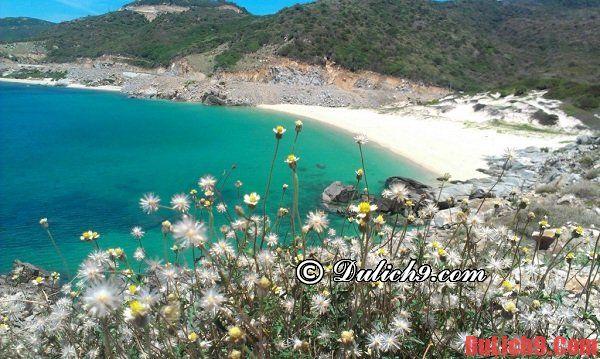 Kinh nghiệm du lịch đảo Bình Hương tự túc