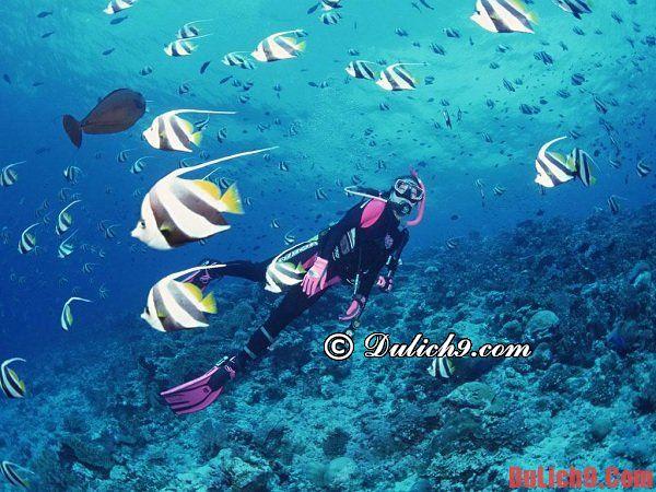 Thời điểm thích hợp nhất để lặn biển ở Nha Trang