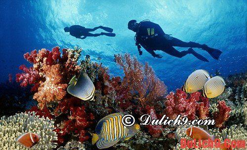 Các địa điểm lặn ở Nha Trang