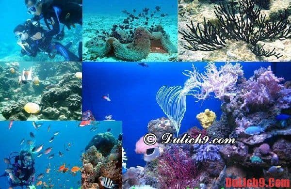 Lặn biển ngắm san hô ở Hòn Mun, Nha Trang
