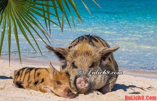 Kinh nghiệm du lịch Bahamas tự túc