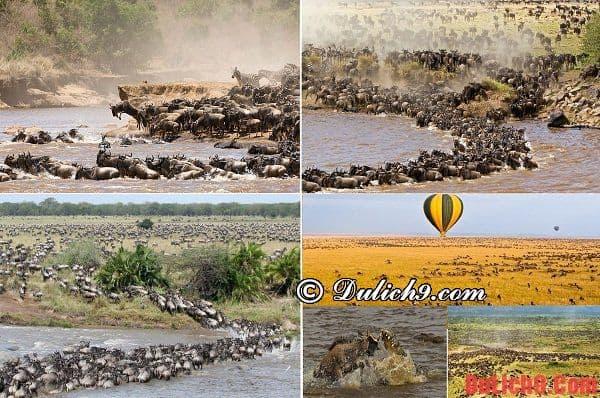 Thời điểm tuyệt nhất để du lịch Kenya