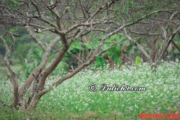 Địa điểm vui chơi ở Mộc Châu mùa hoa cải