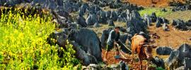 Hành trình phượt, du lịch Cao nguyên đá Đồng Văn mùa hoa tam giác mạch