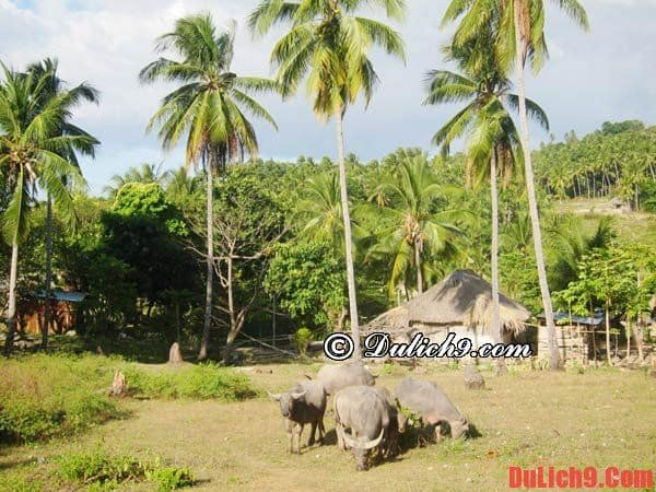 Chơi gì ở Đông Timor, những địa điểm tham quan hấp dẫn ở Đông Timor?