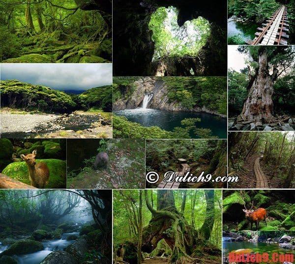 Rừng mưa Yakushima - Du lịch Nhật Bản ghé qua điểm đến không có trong sách du lịchRừng mưa Yakushima - Du lịch Nhật Bản ghé qua điểm đến không có trong sách du lịch