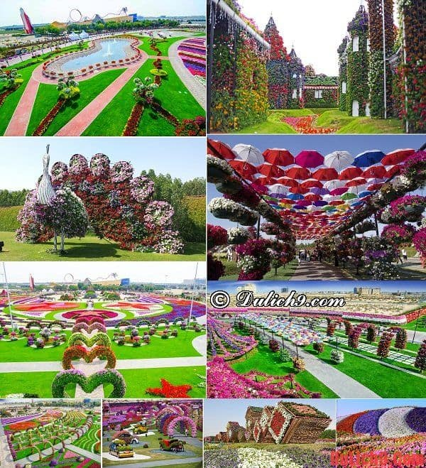 Dubai Miracle Garden - Địa điểm tham quan, ngắm cảnh nổi tiếng Dubai