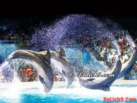 Dubai Dolphinarium - Điểm đến tuyệt vời ở Dubai cho những du khách yêu thích cá heo