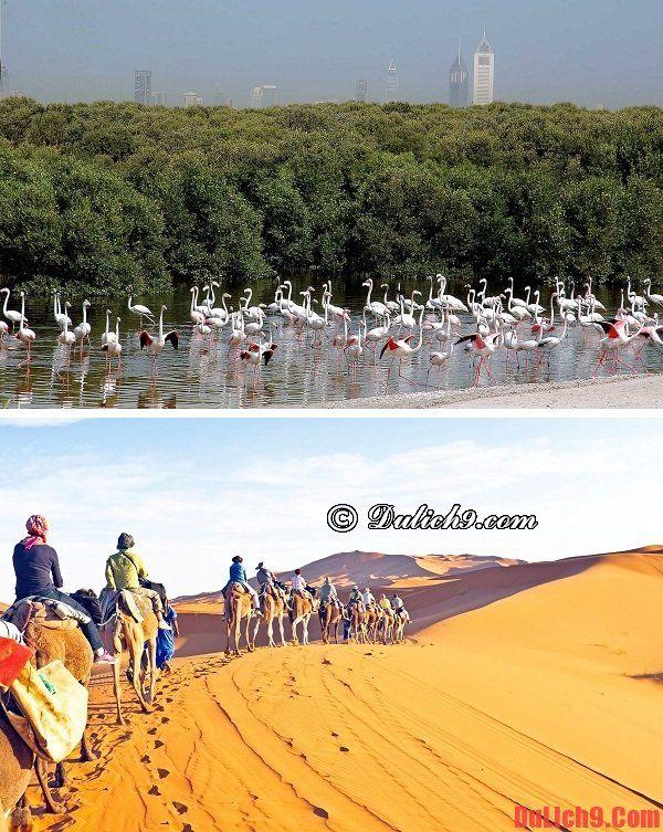 Du lịch Dubai khám phá những khu bảo tồn độc đáo và nổi tiếng