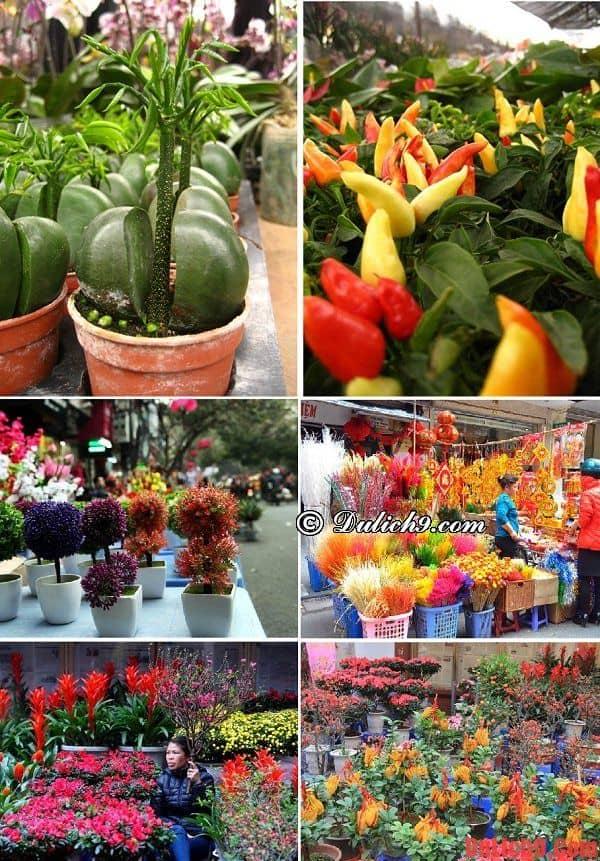 Dạo quanh chợ hoa Phố Cổ nổi tiếng Hà Nội