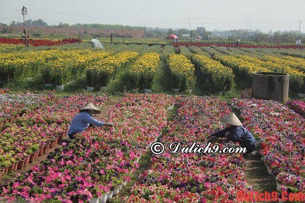 Du lịch Hà Nội khám phá, tham quan những chợ hoa Tết đẹp, độc đáo và nổi tiếng - Những chợ hoa nổi tiếng ở Hà Nội ngày tết