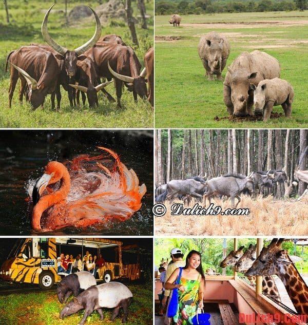 Kinh nghiệm, hướng dẫn du lịch và khám phá Vinpearl Safari Phú Quốc dịp Tết. Hoạt động vui chơi giải trí ở Vinpearl Safari Phú Quốc