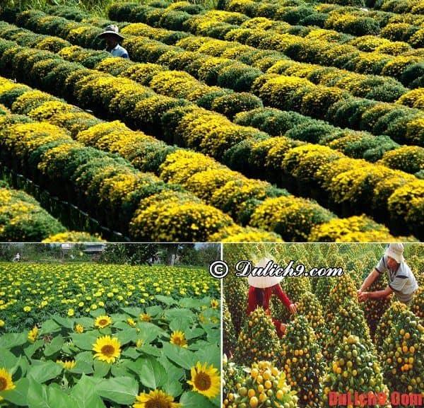 Kinh nghiệm du lịch làng hoa Sa Đéc dịp Tết tự túc thuận lợi và vui vẻ - Du lịch làng hoa Sa Đéc dịp tết chơi gì vui, ăn gì ngon?