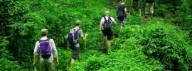 Chia sẻ kinh nghiệm đi du lịch rừng an toàn và cần thiết
