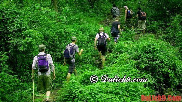Kinh nghiệm đi du lịch rừng