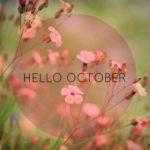 Tháng 10 nên đi du lịch ở đâu đẹp?