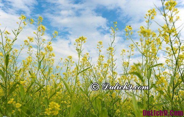 Chụp ảnh đẹp ở Hà Nội mùa thu. Đi đâu chụp ảnh hoa đẹp nhất Hà Nội?