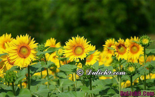 Địa điểm chụp ảnh hoa đẹp ở Hà Nội vào mùa hè