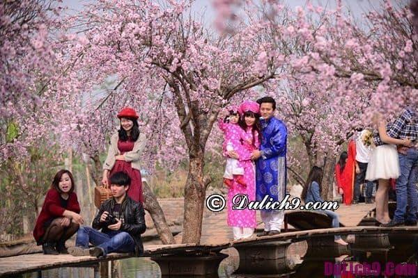 Chụp ảnh hoa đẹp ở Hà Nội vào mùa xuân