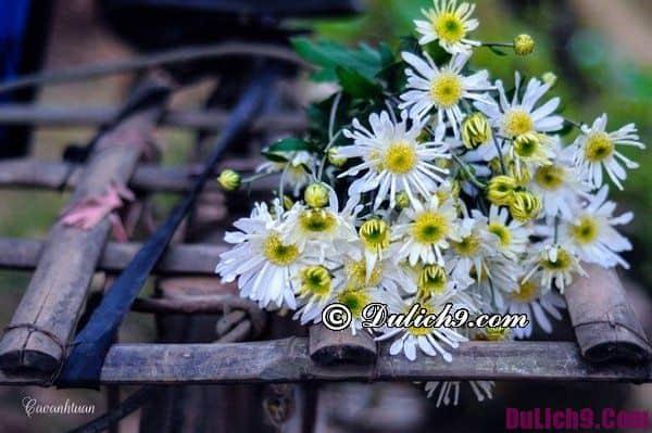 Địa điểm chụp ảnh hoa đẹp ở Hà Nội tháng 11