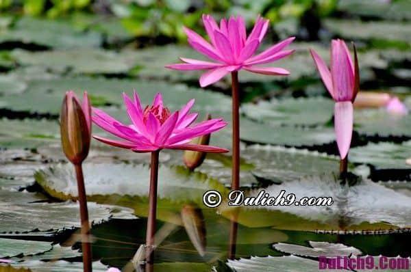 Địa điểm chụp ảnh hoa đẹp ở Hà Nội tháng 11. Đi đâu chụp ảnh hoa đẹp nhất Hà Nội