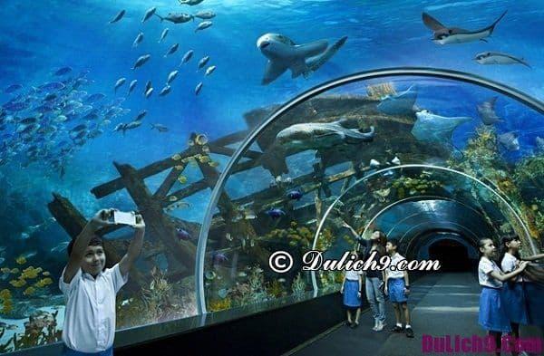 Điểm tham quan ở Sentosa. Kinh nghiệm đi chơi đảo Sentosa Singapore