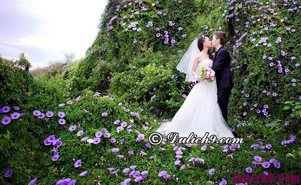 Địa điểm chụp ảnh cưới đẹp ở Đà Lạt độc đáo, lãng mạn: Chụp ảnh cưới ở đâu Đà Lạt đẹp nhất