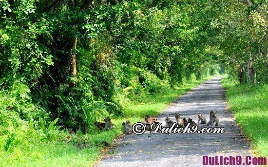 Du lịch Kiên Giang đi đâu chơi? Địa điểm du lịch nổi tiếng ở Kiên Giang
