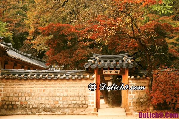 Hướng dẫn du lịch Hàn Quốc vào mùa thu