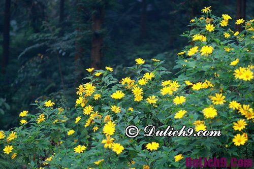 Thời điểm thích hợp ngắm hoa dã quỳ ở Đà Lạt: Hoa dã quỳ nở vào mùa nào ở Đà Lạt