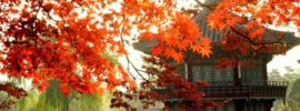 Thông tin hữu ích khi đi du lịch Hàn Quốc dịp thu sang