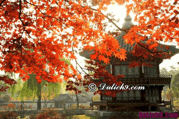Thông tin du lịch Hàn Quốc 2017